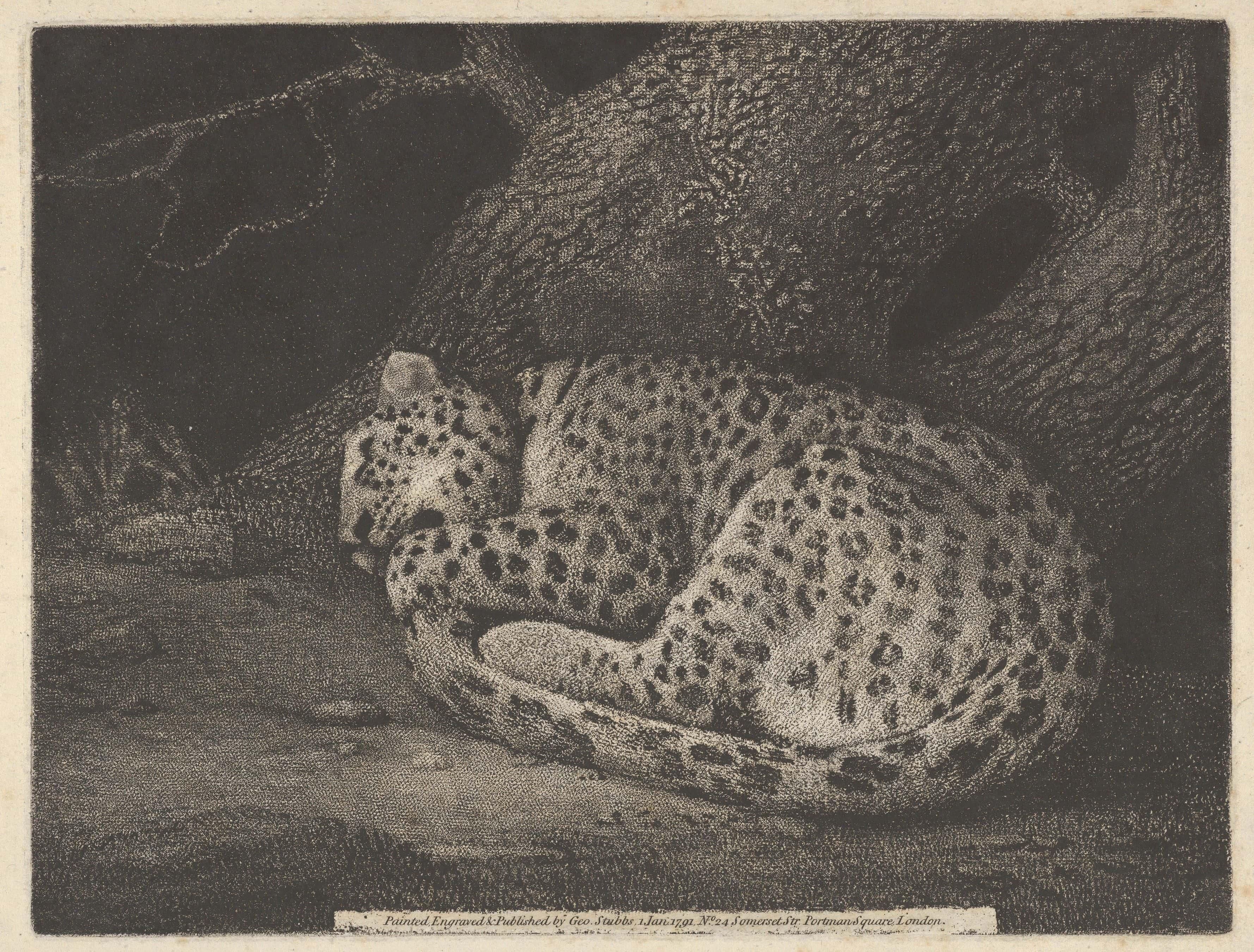 sleeping-leopard.jpeg