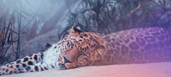 Supple Leopard